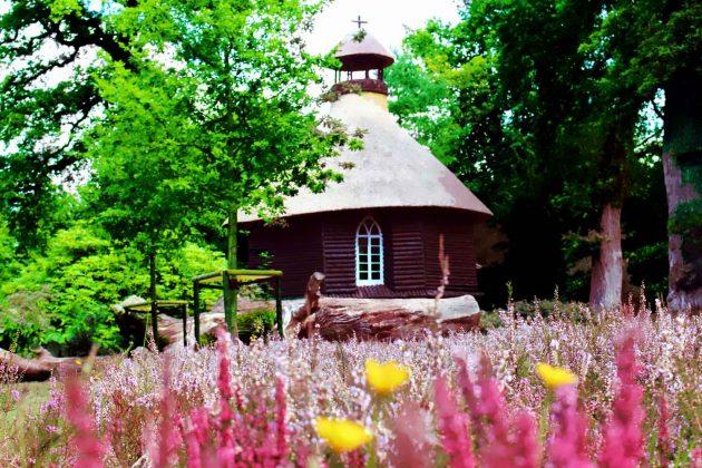 Foto Heidelandschaft mit Reetdachhaus in Ostfriesland, Natur mit Blumen-Vordergrund