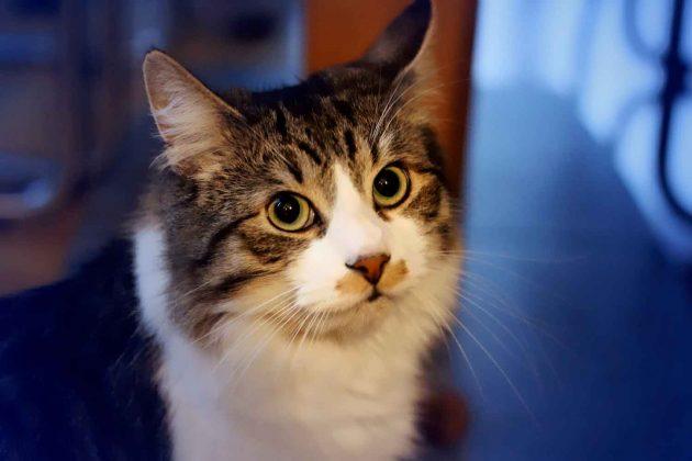 Katze | Tier | lebendig