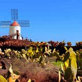 Foto Windmühle mit Pflanzen auf Lava, bunte Farben braun, grün und blau auf Lanzarote, Kanarische Inseln