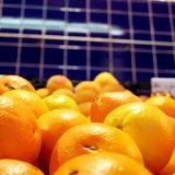 Foto Obst auf Markt in Spanien mit Orangen, Farben orange rot gelb blau mit Fliesen im Hintergrund